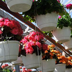 Florist in Oak Harbor OH